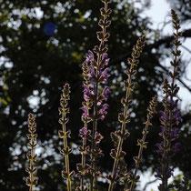 23 Blüten - Foto: Volker Svensson