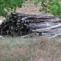 Holzstapel, Fischbeker Heide - Foto: Volker Svensson