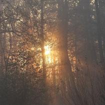 12. Platz 164 Pkt. - Morgens im Moor, Foto: Uta Svensson