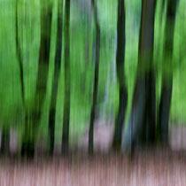 13 Zauberwald - Foto: Willi Heinsohn
