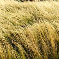 Yellow Gras   -   Foto: Aida Thuresson