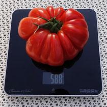 Größte Tomate aus unserem Garten - Foto: Hans Dieckmeyer