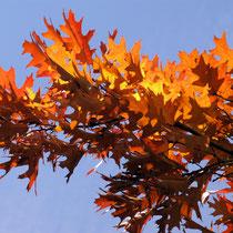 08 Der Herbst in Brauntönen - Foto: Hans Dieckmeyer