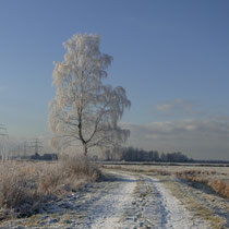 Winter im Moorgürtel - Foto: Gesine Schwerdtfeger