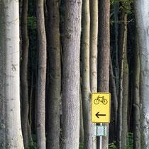 Baum, Gespensterwald - Foto: Dagmar Esfandiari