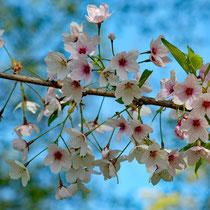 Der Frühling ist da - Foto: Romana Thurz