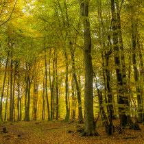30 Ein schöner Herbsttag - Foto: Holger Tobuschat
