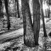 09 Wald lockt zum Spaziergang - Foto: Gerd Jürgen Hanbeck