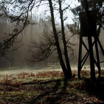 Aprilmorgen - Foto: Willi Heinsohn