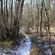 Der Weg ins Moor - Foto: Gesine Schwerdtfeger
