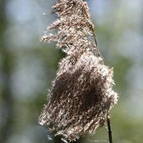 Herbststimmung   -   Foto: Uta Svensson