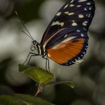 Schmetterling - Foto: Holger Tobuschat