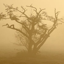 7 Nebelmorgen - Foto: Volker Svensson