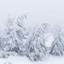 Der Winter ist endlich dar - Foto: Holger Tobuschat