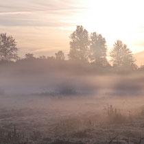 Herbstmorgen, Neuwiedenthal - Foto: Uta Svensson
