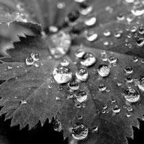 10. Platz 166 Pkt. Regentag im Garten - Foto: Rüdiger Nebelsieck