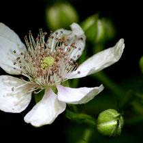 18 Obstblüte - Foto: Dagmar Esfandiari