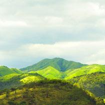Regenwald in Puerto Rico - Foto: Aida Thuresson