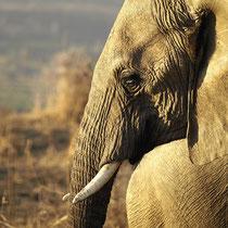 Uganda, Murchison Falls NP - Foto: Dagmar Esfandiari