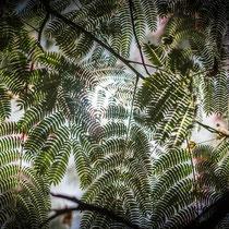 Arboretum - Foto: Gesche Andresen