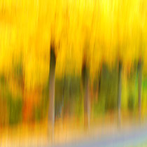 6 Blätter fallen - Foto: Willi Heinsohn