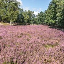 Boberger Heide - Foto: Adolf Dobslaff
