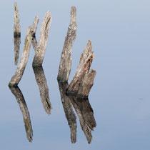 12 Spiegelung - Foto: Britta Hamann