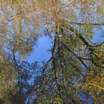 Spiegelungen, Neugrabener Moor - Foto: Anja Lewertoff
