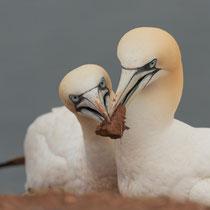 Solider Nestbau bewährt sich - Foto: Janine Brauneis