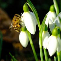 Der Frühling ist da! - Foto: Romana Thurz