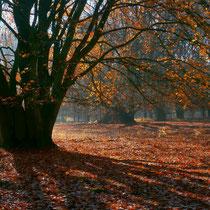 1 Herbstsonne - Foto: Gerd Jürgen Hanebeck
