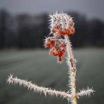 20 Eiskristalle - Foto: Holger Tobuschat