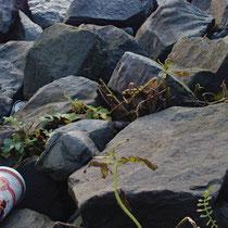 03 Müll an der Elbe, Hamburg Entenwerder, Foto Marina Staniek