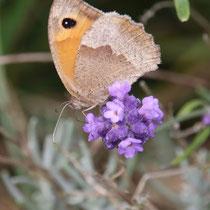 Schmetterling   -   Foto: Uta Svensson