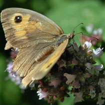 2015-08-01 Schmetterling-Wentorf  -  Foto: Jörg Recoschewitz