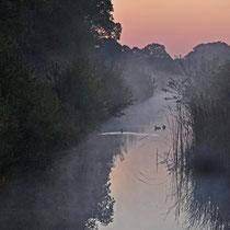 Morgenlicht Neugrabener Moor   -   Foto:   Anja Lewertoff