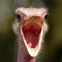 1. Platz 201 Pkt. Emu - Foto: Romana Thurz