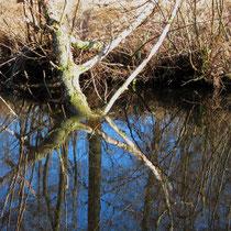 Spiegelung, Neuwiedenthal - Foto: Volker Svensson