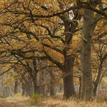 01 Wiitmoor - Foto: Dagmar Esfandiari