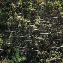 Spinnenwerk, Fischbeker Heide - Foto: Volker Svensson