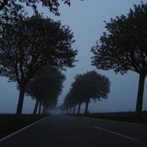 Windschiefe Bäume im Abendnebel - Foto: Gerd Jürgen Hanebeck