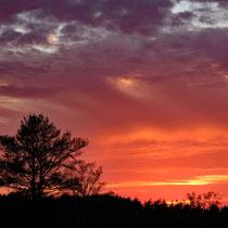19 Sonnenuntergang in der Fischbeker Heide - Foto: Romana Thurz