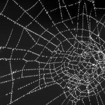 12 Spinngewebe - Foto: Hans Dieckmeyer