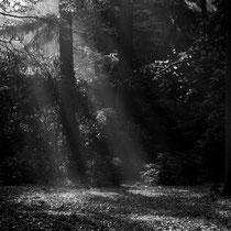 Novemberstimmung, Ohlsdorfer Friedhof - Foto: Willi Heinsohn