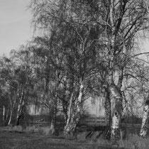 9. Platz 144 Pkt. - Hausbrucher Moor - Foto: Hans Dieckmeyer