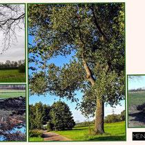 """Es war einmal ein Baum! ,,Mein Freund der Baum"""" - Foto: Hans Dieckmeyer"""