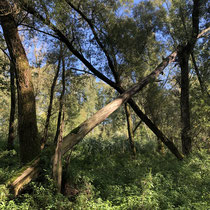 Vollhöfner Wald - Foto: Gerd Jürgen Hanebeck