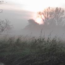 Frühnebel im Neugrabener Moor - Foto: Volker Svensson