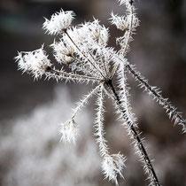 13 Eiskristalle - Foto: Holger Tobuschat