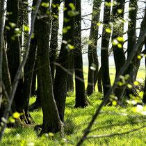 Moorgürtel   -   Foto: Dagmar Esfandiari